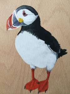 Fratercula & Clupea harengus (too slow) (detail of puffin)